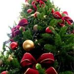 joulukuusi-kuva1
